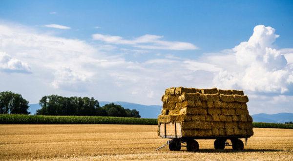 Le chantier de la future stratégie agricole est ouvert. Cette nouvelle feuille de route est censée être fin prête en 2019, suite à l'achèvement de l'étude qui la sous-tendra et dont l'appel d'offres a été lancé en 2018. La stratégie en projet devra éclairer les choix stratégiques du secteur agricole à moyen et long termes, tout en gardant en ligne de mire les objectifs prioritaires de l'employabilité des jeunes, la réduction des inégalités et la lutte contre la pauvreté et l'exode rural. Elle devra surtout favoriser l'émergence d'une classe moyenne agricole et en consolider l'ossature pour que, en définitive, cette frange de la population exerce sa double vocation de facteur d'équilibre et de levier de développement socio-économique. «Pour permettre à la population rurale d'accéder à la classe moyenne et/ou de s'y maintenir, d'être en mesure d'épargner et d'investir, il est nécessaire d'offrir aux jeunes ruraux un emploi productif, dans un milieu où les services de base et les loisirs sont accessibles», souligne le département de l'Agriculture. Selon lui, les jeunes ruraux ont besoin d'être formés, encouragés à entreprendre dans l'agriculture, initiés pour le choix de leurs cultures, soutenus dans leurs investissements et accompagnés pour la promotion et la commercialisation de leur production. La réussite de ces objectifs nécessite, selon les services du ministère, d'une part, la consolidation des acquis du Plan Maroc vert et, d'autre part, la levée des contraintes pesant sur le développement de l'agriculture, notamment celles liées à la commercialisation, à l'accès à l'eau et au foncier agricole. Rappelons que cette nouvelle stratégie agricole fait suite à l'audience accordée par S.M. le Roi au ministre de l'Agriculture, le 19 octobre 2018 à Marrakech, et lors de laquelle le Souverain a réitéré ses souhaits et ambitions pour un monde rural marqué par la création de nouvelles activités génératrices d'emplois et de revenus, essentiellement en faveur des jeunes.