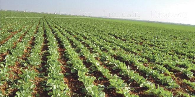 Agrégation agricole Un nouveau dispositif réglementaire pour des projets de nouvelle génération
