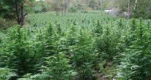 usage licite du cannabis Maroc